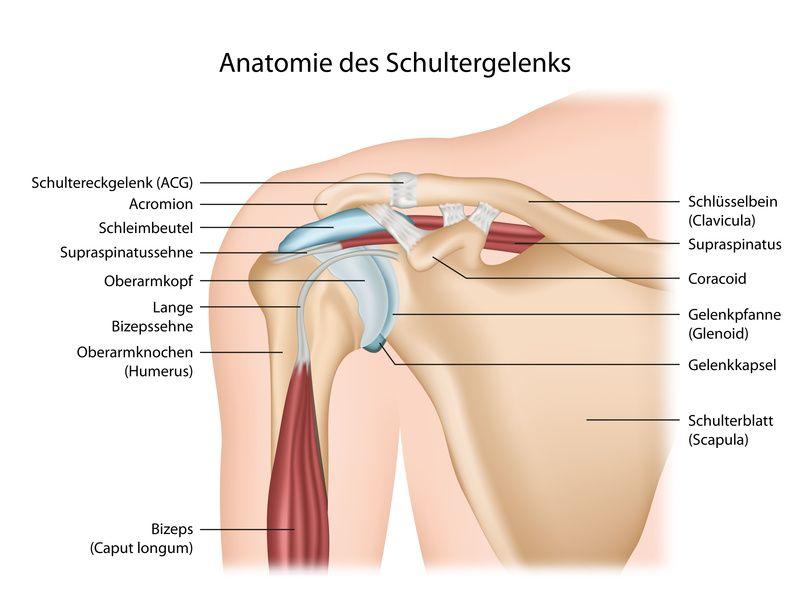 Die Schulter - Anatomie und Erkrankungen an der Schulter