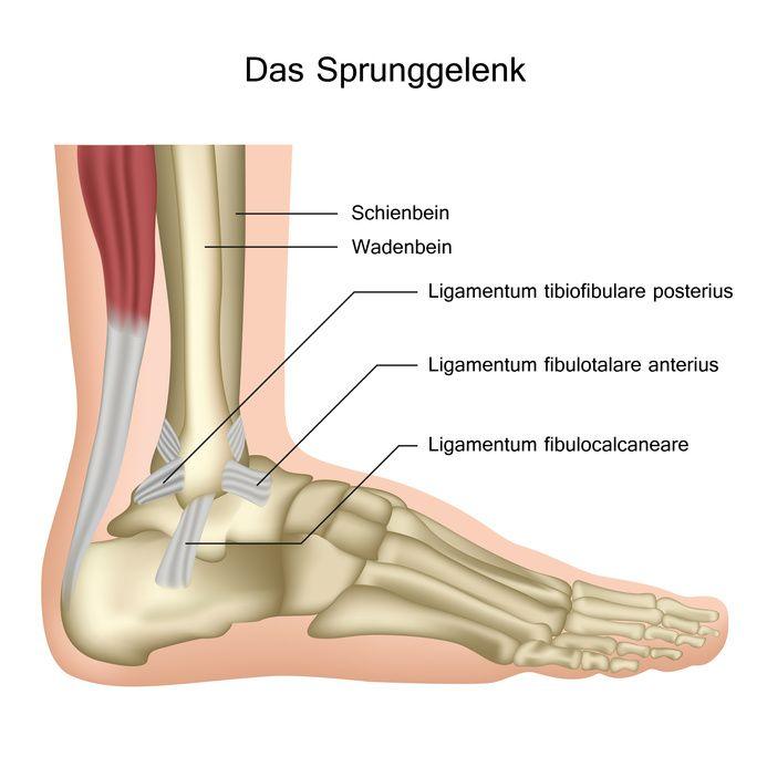 Fuß und Sprunggelenk - Anatomie und Erkrankungen