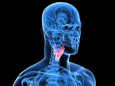 Der Hals - Aufbau, Funktion und häufige Erkrankungen