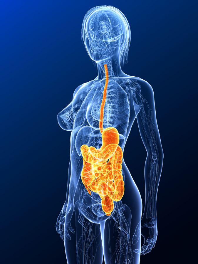 Gastroenteritis Magen Darm Entzündung Symptome Diagno