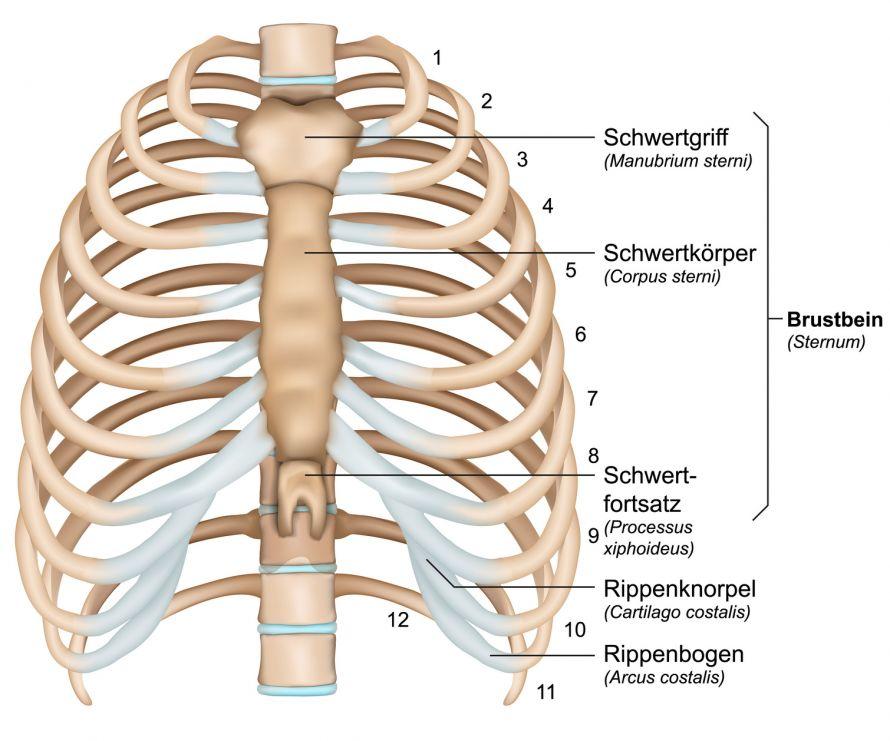 Rippenbruch | Häufigste Brustkorbverletzung