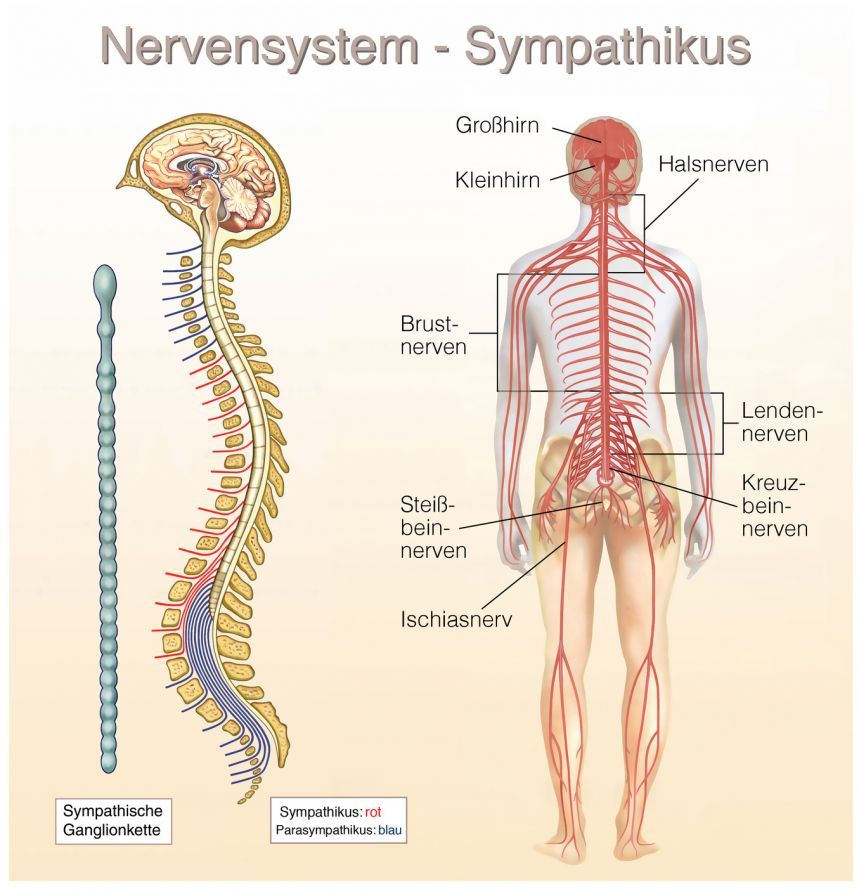 Erfreut Nerven Bein Ideen - Anatomie Ideen - finotti.info