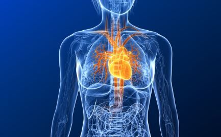 Herzerkrankungen Wichtige Herzkrankheiten Im überblick