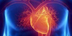 Herzoperationen – Wichtige Herz-OP's im Überblick