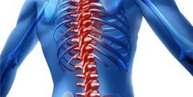 Die Wirbelsäule - Anatomie und Erkrankungen der Wirbelsäule