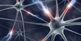 Das Nervensystem - Funktionsweise, Aufgaben und Erkrankungen